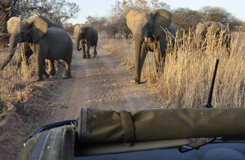 kwalata-game-lodge-in-dinokeng-big5-game-reserve-gauteng-ggame-drive-elephants
